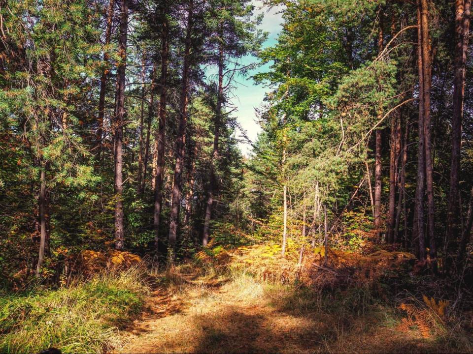 Три туристически пътеки около Пловдив